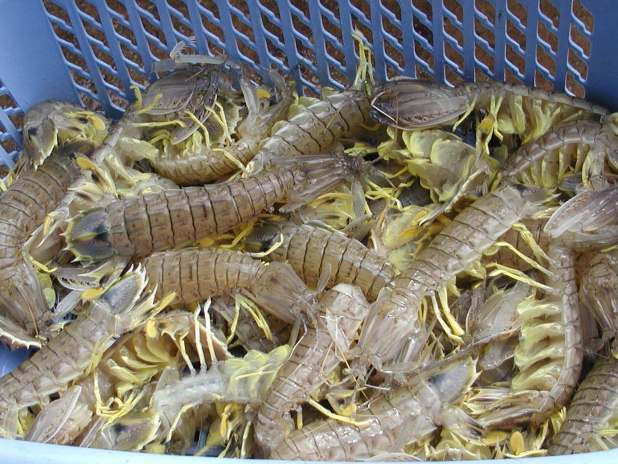 Fresh seafood from Surat Thani